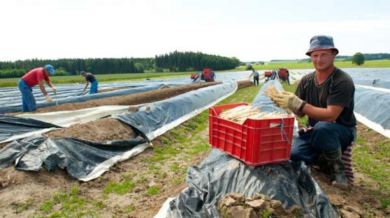 Diskussion um den Mindestlohn für Saisonarbeitskräfteim Bereich Obst und Gemüse.