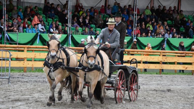 Im Großen Ring warten rasante Pferdevorführungen auf die Besucher.