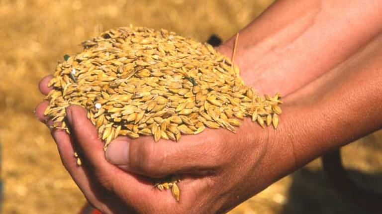 Erntebilanz 2012: Zufriedenstellende Hektarerträge in Bayern