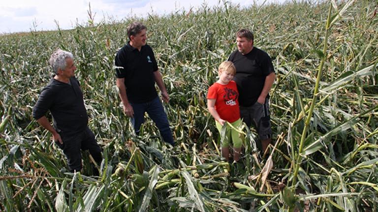 BBV-Vizepräsident Günther Felßner vor Ort: Im Landkreis Fürth hinterließen Hagel und Sturm eine Spur der Verwüstung. Zahlreiche Maisfelder wurden verwüstet und Gebäude stark beschädigt.