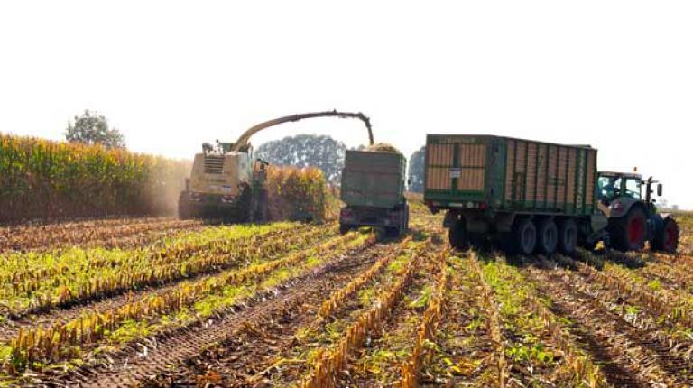 Generell sei der Mais heuer in der Vegetation früh recht weit gewesen.