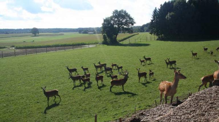 In Bayern gibt es 2350 landwirtschaftliche Wildgehege.