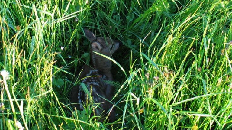 Viele Wiesen sind im Frühjahr Kinderstube für zahlreiche Wildtiere.