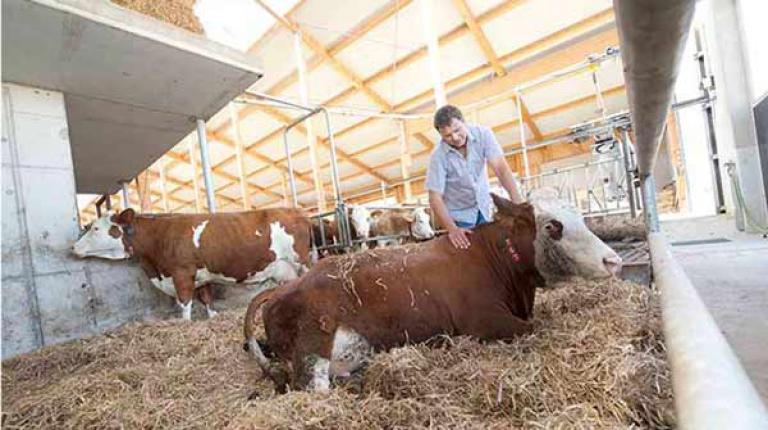 Moderne Ställe bieten Licht und Luft. Doch die NEC-Richtline könnte diese Konzepte für mehr Tierwohl zerstören.