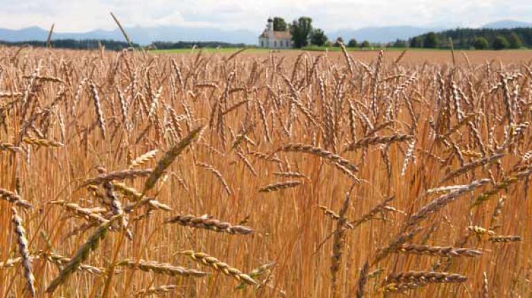 Die EU-Saatgutverordnung muss freien Handel von alten Sorten auch weiterhin ermöglichen.