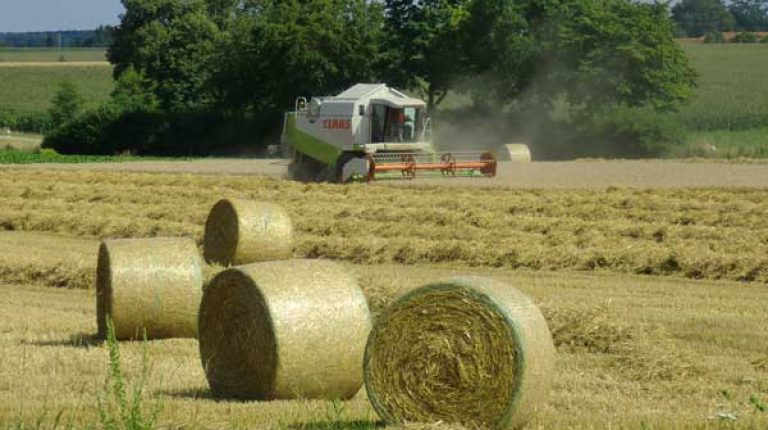 In Bayern wurden in allen Getreidearten überdurchschnittliche Mengen eingefahren.