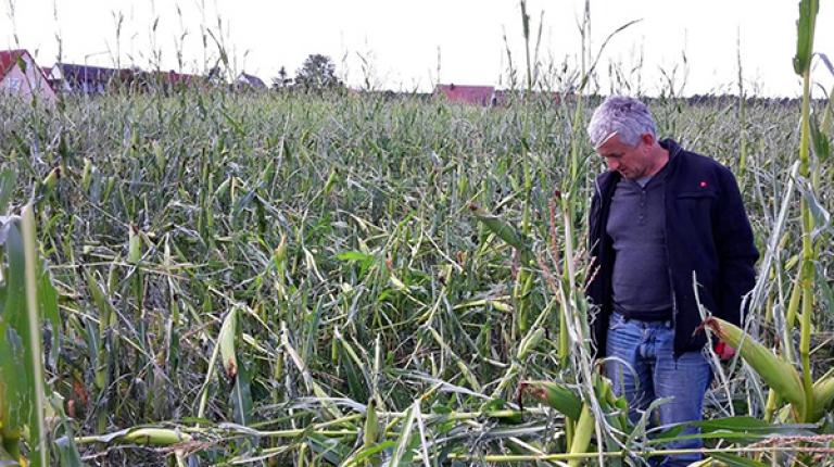 Im Landkreis Fürth richteten Hagel und Sturm in einem 6 km breiten und 15 km langen Korridor eine Schneise der Verwüstung an - zahlreiche Maisfelder wurden verwüstet und Gebäude stark beschädigt