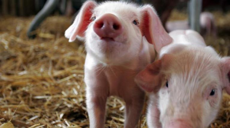 Bayerischer Bauernverband begrüßt Änderung des deutschen Patentgesetzes.