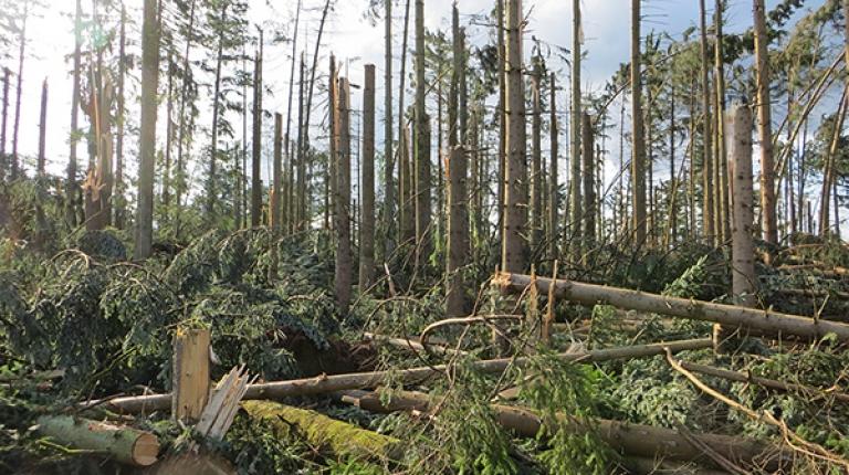 Sturmschäden im Landkreis Passau, wo die Waldbewirtschaftung für viele Landwirte existenziell wichtig ist