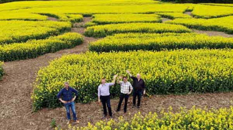 Landwirt Markus Werner hat in Zusammenarbeit mit Thomas Zehnter, Mathias Klöffel und Michael Diestel die wohl größte Biene Deutschlands im Rapsfeld angelegt.