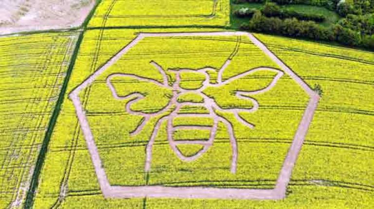 Mithilfe modernster Technik und GPS-Steuerung war es möglich, die große Raps-Biene in das Raps-Feld zu mähen.