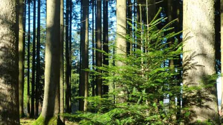 Forstwirtschaft hat eine sehr nachhaltige Bedeutung, dies ist auch die Botschaft am 'Tag des Waldes'.