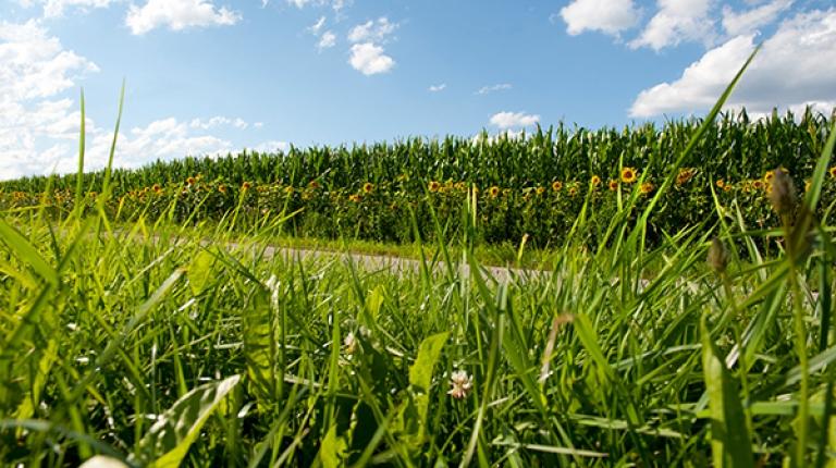 Der neu erschienene Bericht des Umweltministeriums belegt, dass Bayerns Landwirte maßgeblich zum Umwelt- und Naturschutz beitragen.