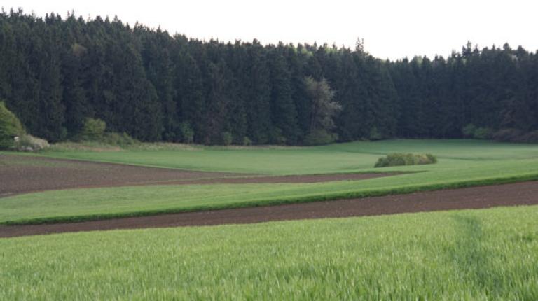 Bauern und Jäger verbessern Lebensraum  Gemeinsame Aktion zum Zwischenfruchtanbau