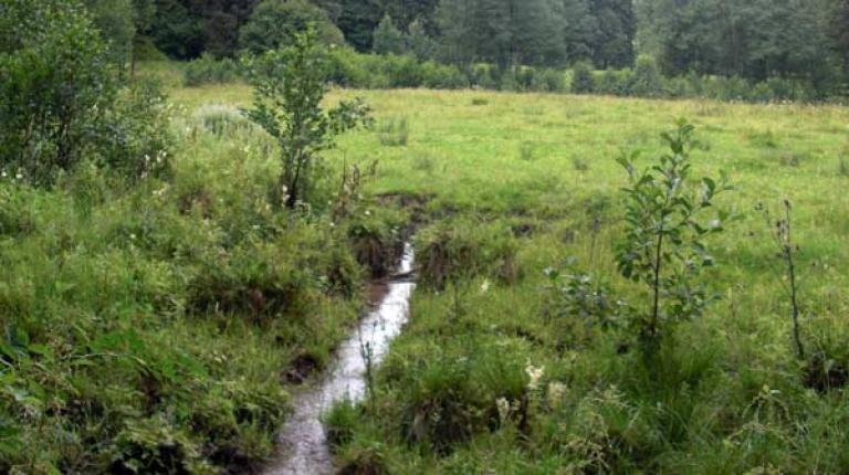 Bayerische Bäuerinnen und Bauern nehmen das Thema Gewässerschutz sehr ernst.