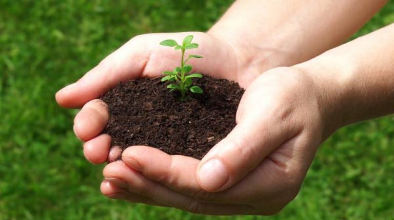 Bauernverband kritisiert Konzentrationsprozesse und fordert vielfältiges Saatgutangebot.