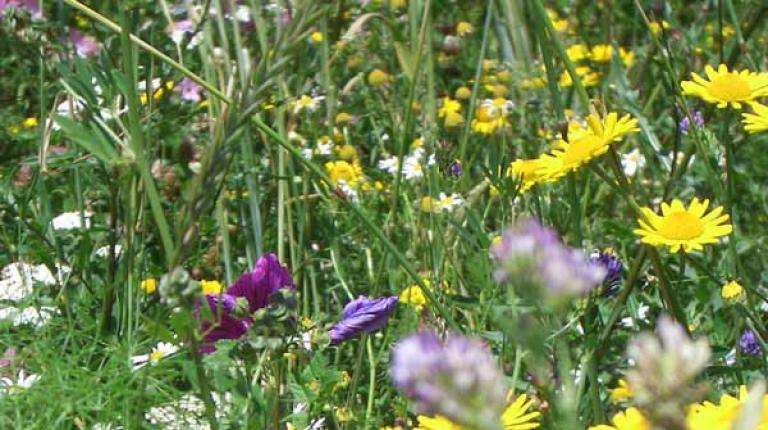 Blühende Rahmen bieten einen wertvollen Lebensraum für Bienen, Insekten und Wildtiere.