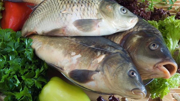 Als Klassiker unter den heimischen Fischen gilt der Karpfen, der unter anderem in Mittelfranken gezüchtet wird