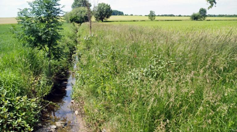 Jeden dritten Hektar bewirtschaften die bayerischen Bauern im Rahmen der Agrarumweltprogramme, des Kulturlandschaftsprogramms oder des Vertragsnaturschutzes.