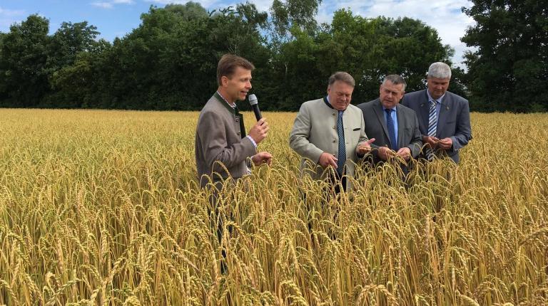 Betriebsleiter Andreas Hatzl, Staatsminister Helmut Brunner, BBV-Präsident Walter Heidl und BBV-Getreidepräsident Hermann Greif im Bio-Dinkelfeld.