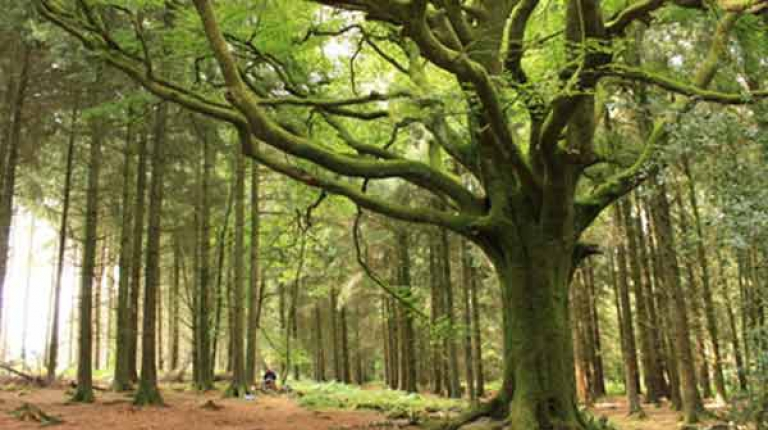 Bayerns Wälder sind in guten Händen.