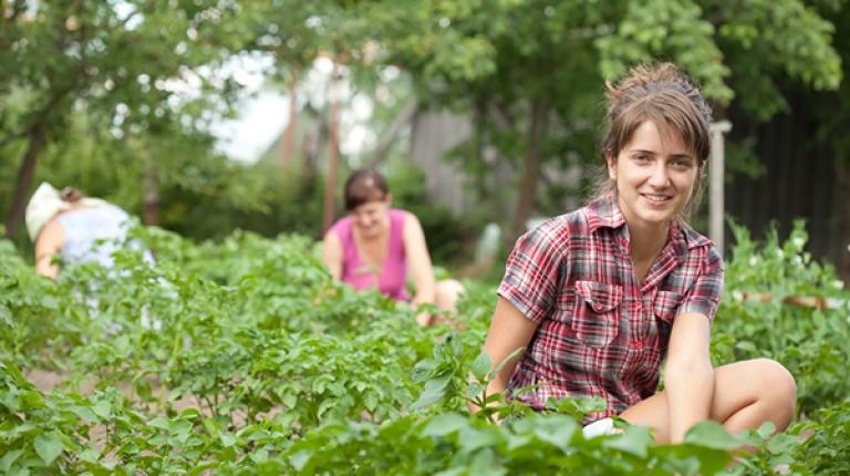 Für Schüler, die in den Sommerferien auf Ihrem Hof mitarbeiten wollen, gilt das Jugendarbeitsschutzgesetz