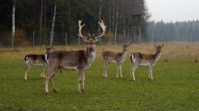 Das Fleisch von Wildtieren stammt entweder aus der Jagd oder aus der landwirtschaftlichen Gehegehaltung.