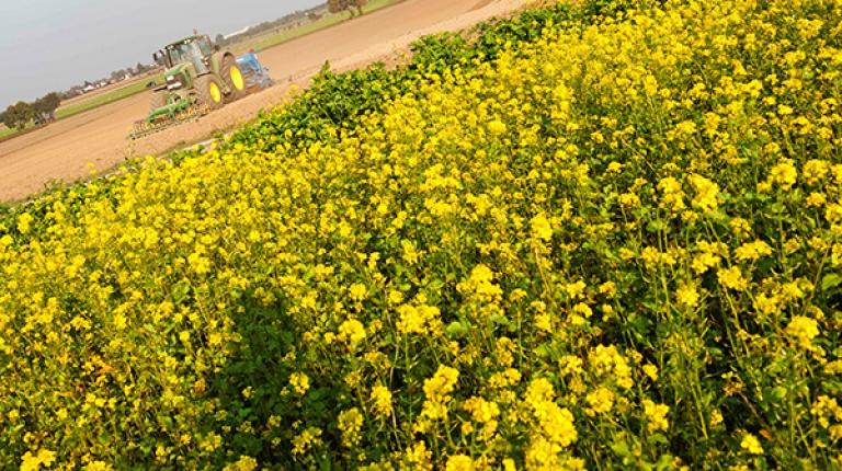 Wie wirkt sich das kalte Frühlingswetter auf die Pflanzen aus? Darüber sprach der BBV-Landesfachausschuss.