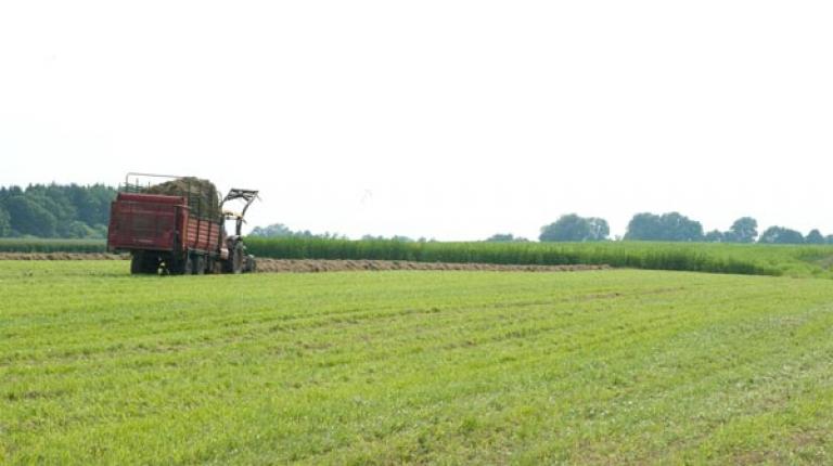 Greening muss einfach und flexibel sein: Bauern brauchen Wahlmöglichkeiten!