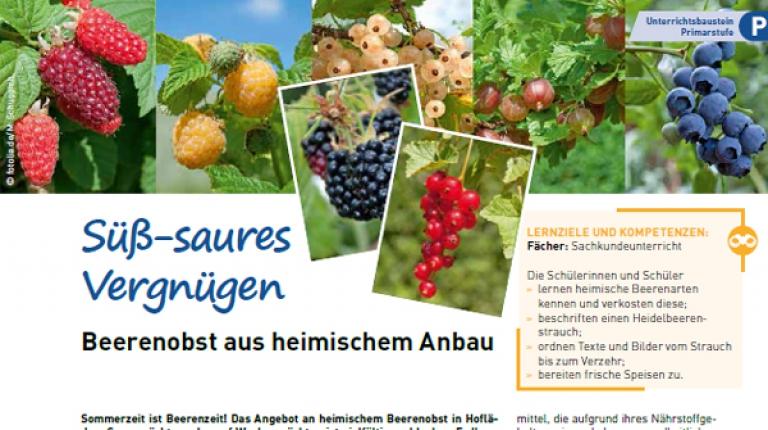 """Beerenobst, Ökobilanzen und sind als neue Serie im Lehrermagazin """"lebens.mittel.punkt"""" zu lesen."""