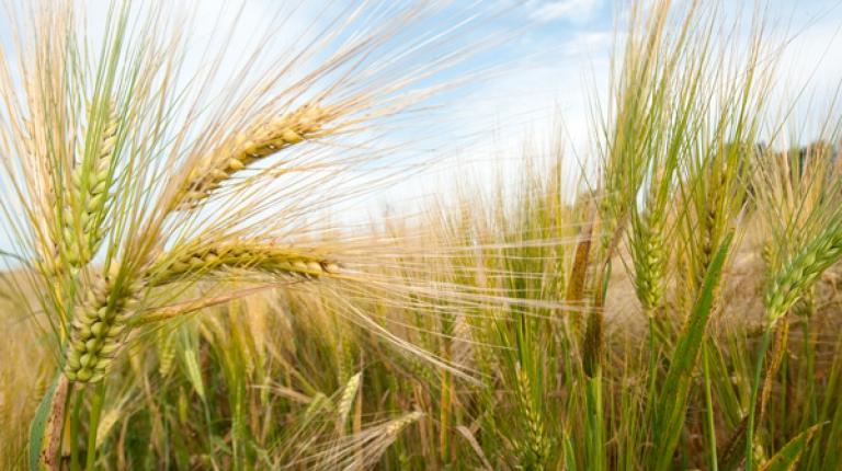 Die Agrarstrukturerhebung fragt unter anderem nach Bodennutzung, Tierbeständen und Ökolandbau