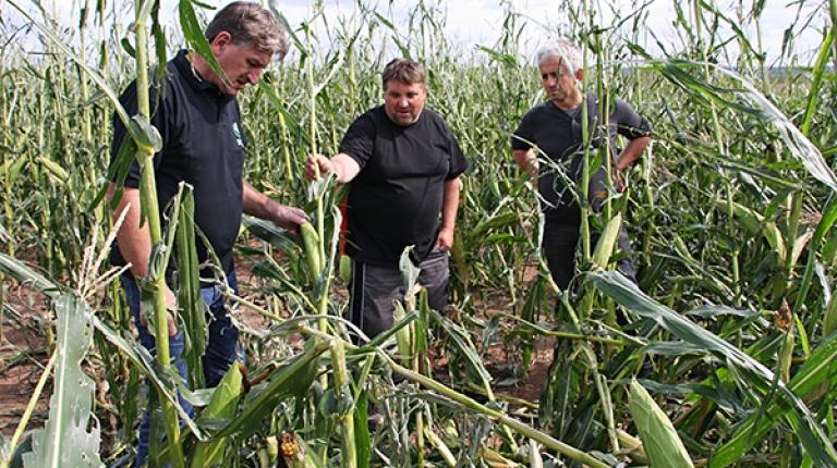 BBV-Vizepräsident Felßner verschafft sich im Landkreis Fürth einen Eindruck der Sturmschäden