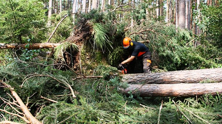 In den Wäldern zerstörte der Sturm vielerorts die Arbeit von Generationen