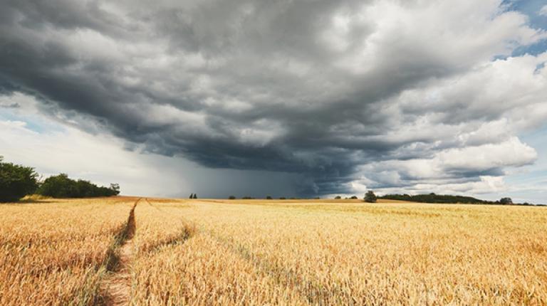 Die immer wieder einsetzenden, starken Regenschauer der letzten Tage und Woche machen den Landwirten bei der Ernte zu schaffen