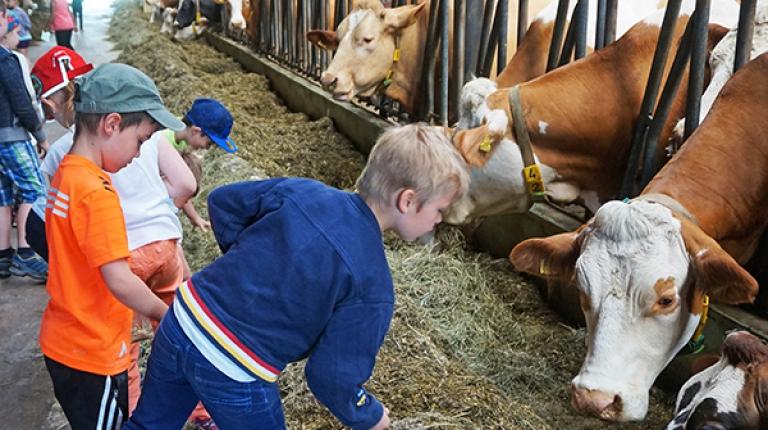 In der Grundschule besuchen noch über die Hälfte der Schülerinnen und Schüler einen Bauernhof. Ab der 5. Klasse sind es jedoch nur noch ein Fünftel...