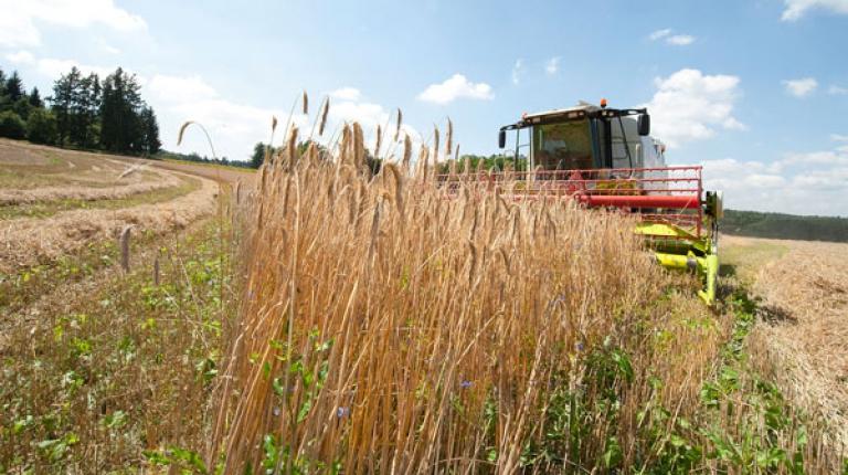 Eine Zukunft ist ohne die Landwirtschaft nicht denkbar.