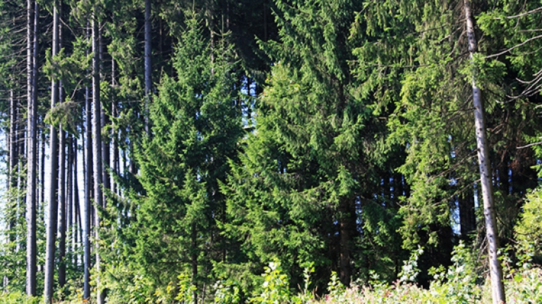 Um ökonomische und ökologische Ziele gleichermaßen zu verwirklichen, brauche es keinen dritten Nationalpark