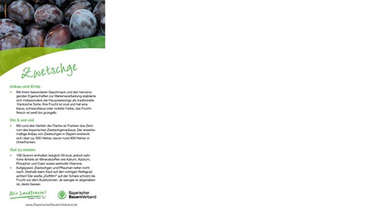 Erntekarte Zwetschge - mit Rezept für Zwetschgenratatouille