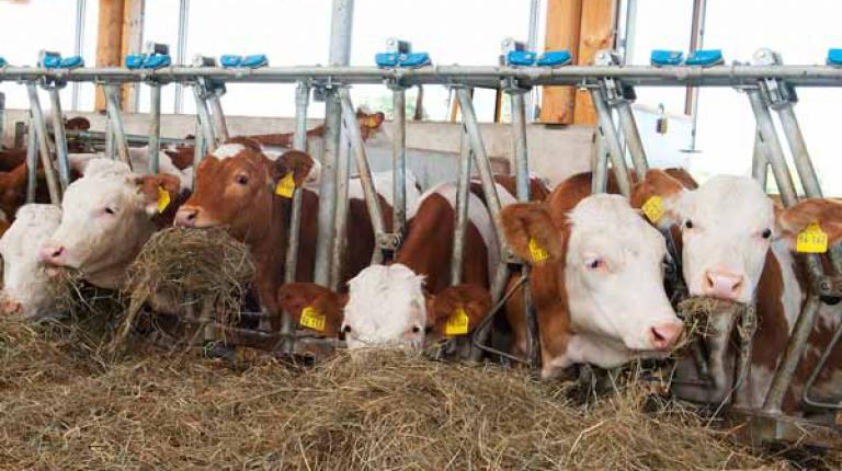 Bayerns Bauern achten auf eine tiergerechte Haltung.