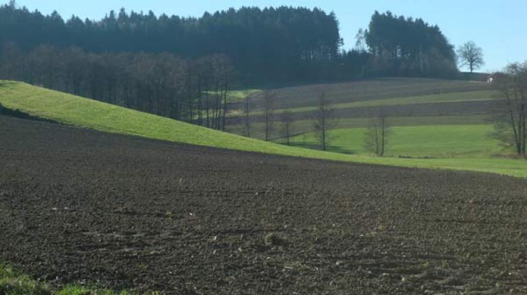 """""""Beim Greening muss sich das Parlament eindeutig gegen jegliche Form der Stilllegung von Ackerflächen aussprechen"""