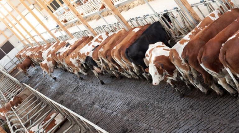 Waschwasser aus der Milchproduktion darf weiterhin in die Güllegrube.