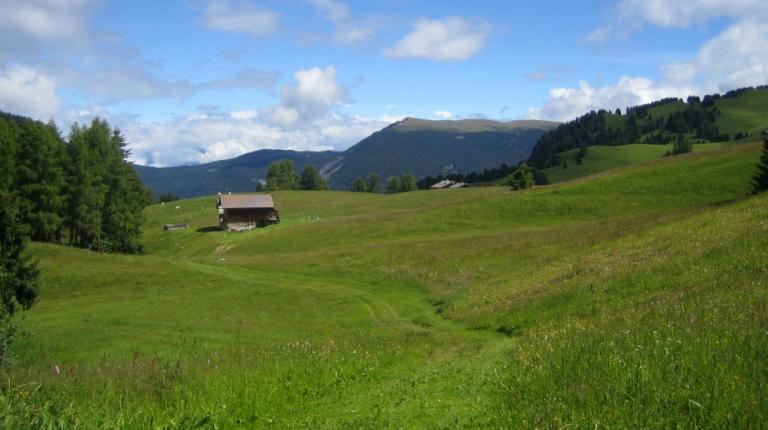 """""""Durch die Bewirtschaftung und oft harte Arbeit wird hier oben auf den Almen die uralte Kulturlandschaft und die Artenvielfalt erhalten"""", sagt der bayerische Bauernpräsident Walter Heidl."""
