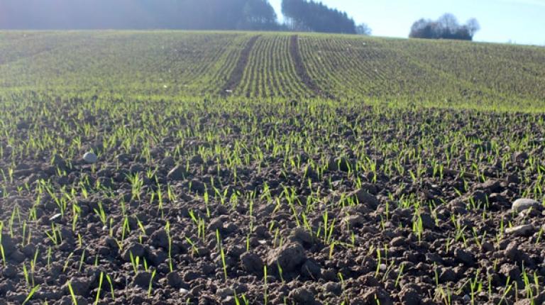 Mit dem Frühjahr beginnt für die Landwirtschaft wieder die Arbeit auf den Feldern.