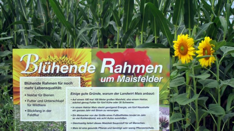 """""""Blühende Rahmen"""" rund um Felder schaffen am Feldrand zusätzlichen Lebensraum für Bienen und Wildtiere."""
