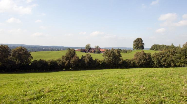 Dem Situationsbericht des Deutschen Bauernverbandes (DBV) liegen die Daten von 12.826 deutschen Betrieben zugrunde, darunter ein Drittel aus Bayern.
