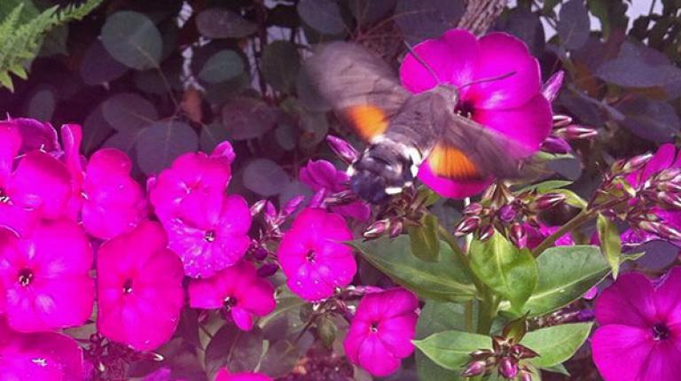 Bei Insekten gibt es erhebliche Lücken bei der Datengrundlage, die dringend geschlossen werden müssen