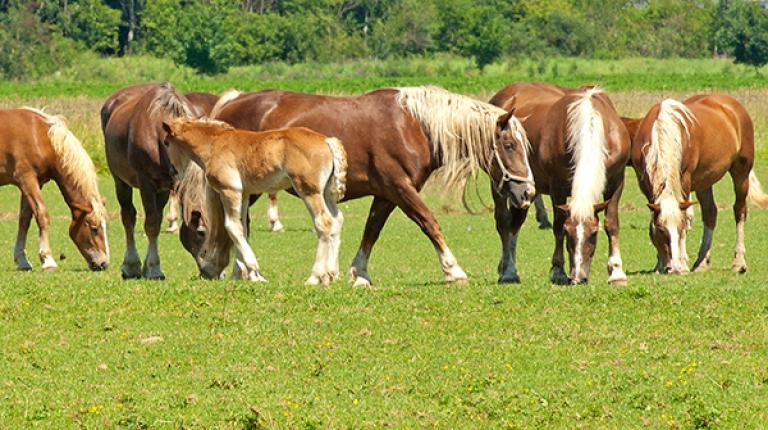 Beim Fachseminar am 28. Februar und 1. März erfahren Sie Neuestes zur Pferdehaltung